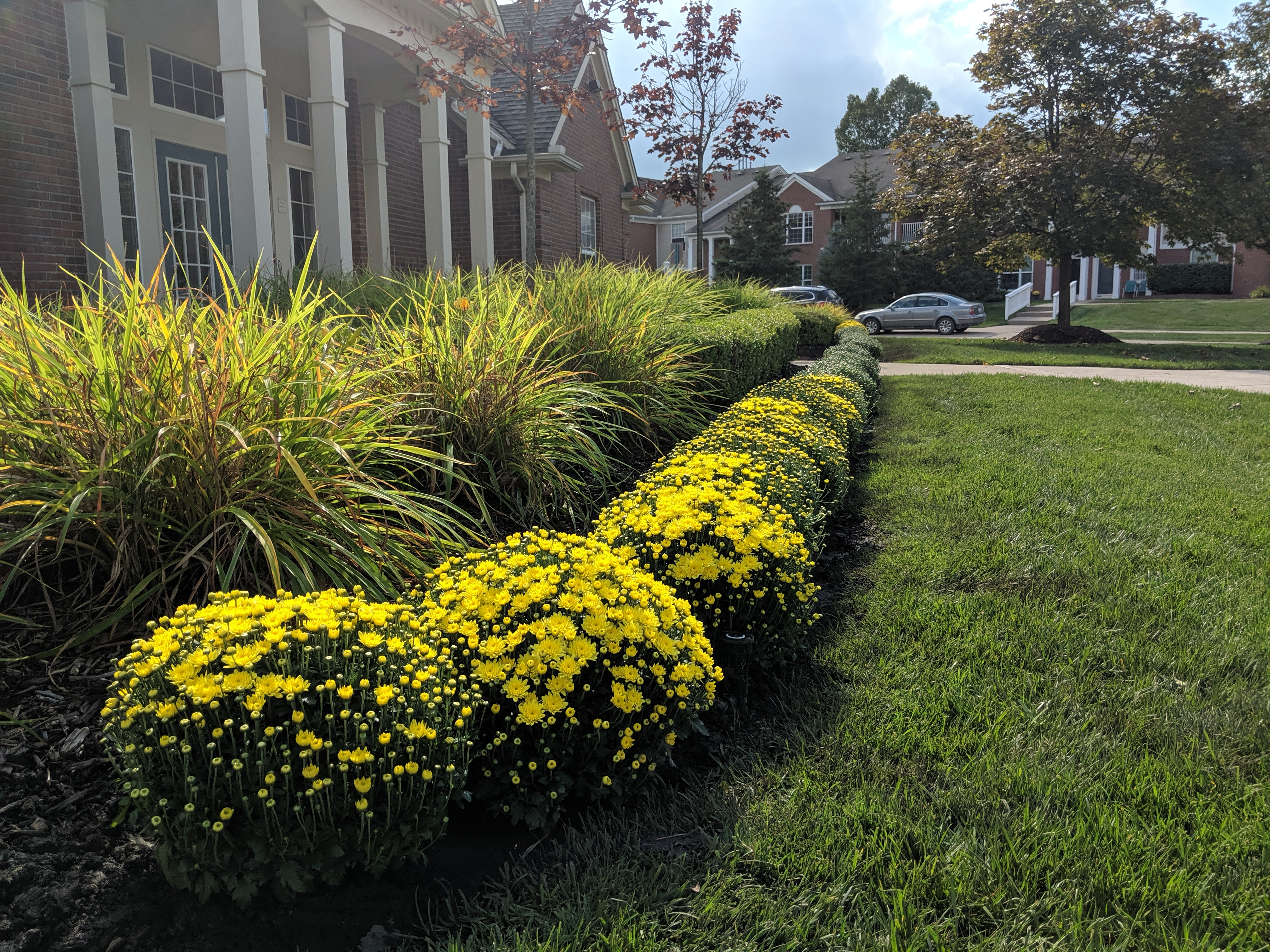 Fall Mums at the clubhouse and Northville Ridge Terraces